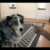 He Gave His Dog A Treat, But The Dog Refused. Then I Fell Down Laughing!