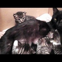 Mama Cats Starts Talking, But See Who She's Talking To! Aww!